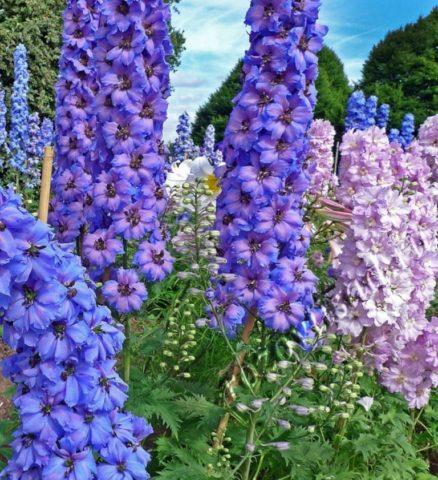 Многолетники, цветущие все лето: фото с названиями