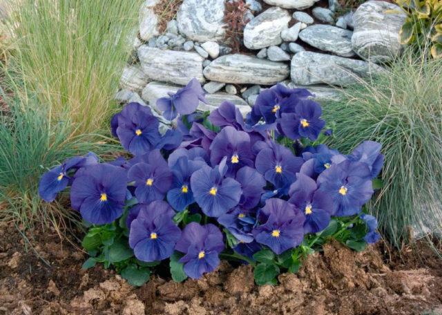 Цветы-многолетники для клумбы: фото с названиями
