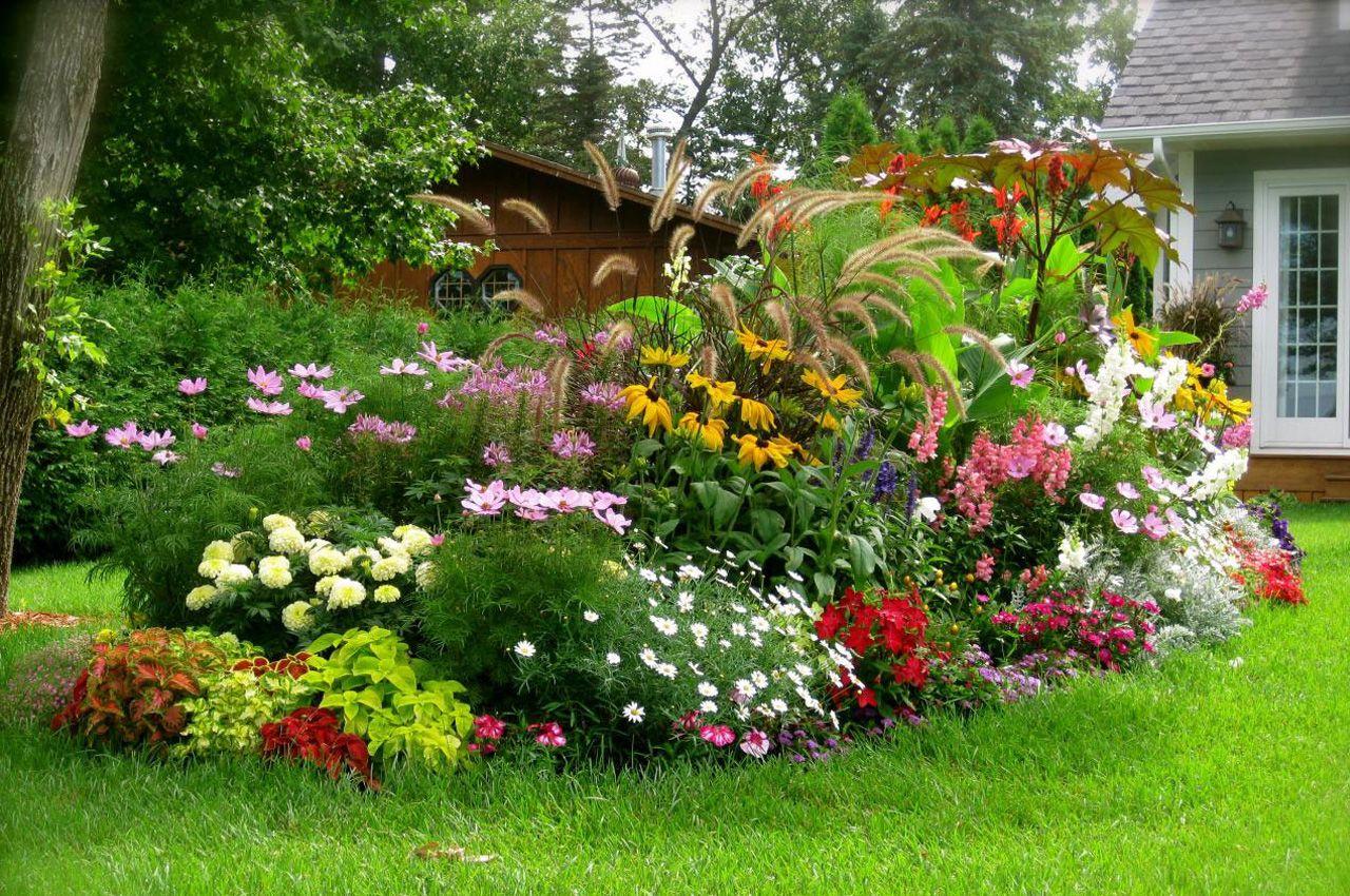 выглядят цветы в огороде фото и название уличные спутниковой картой