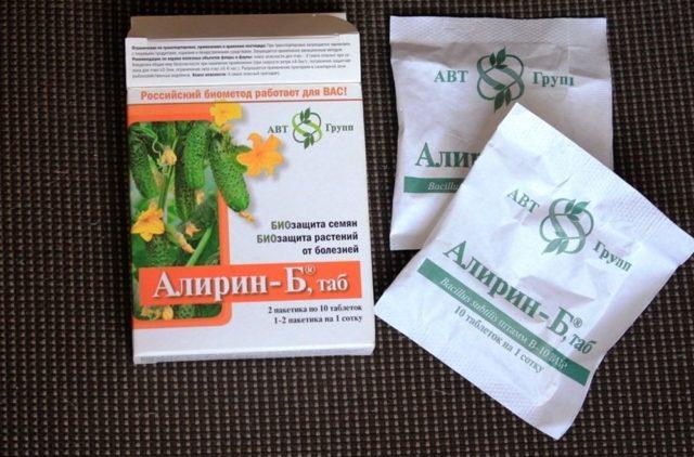 Абутилон гибридный смесь Бельвю: выращивание из семян