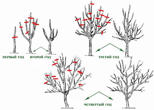 Гортензия метельчатая Vanille Fraise (Ваниль Фрайз): описание, как обрезать, отзывы