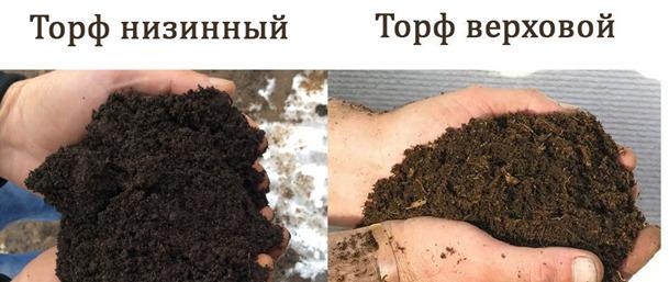 В какой грунт сажать петунию: как сделать своими руками, кислотность