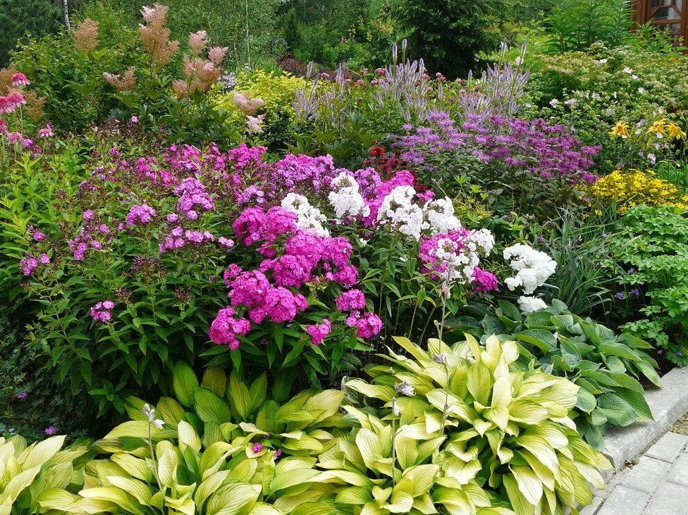 композиции цветов многолетников