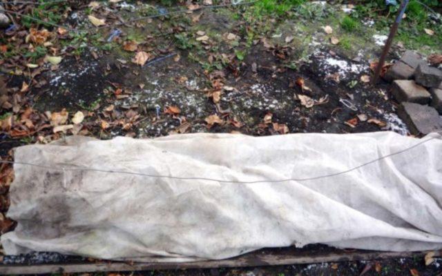 Как подготовить лилейник к зиме на даче