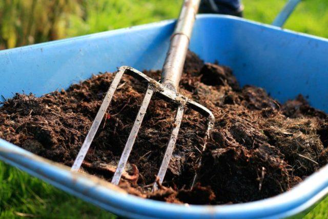 Подкормка пионов осенью и подготовка к зиме