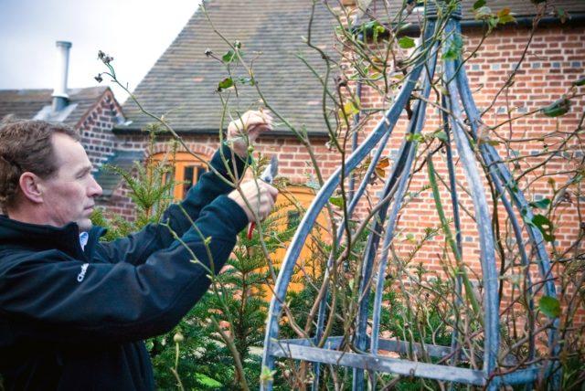 Как укрывать розы на зиму на Урале
