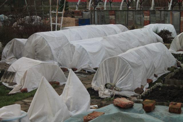 Укрытие плетистых роз на зиму в Подмосковье, на Урале, в Сибири