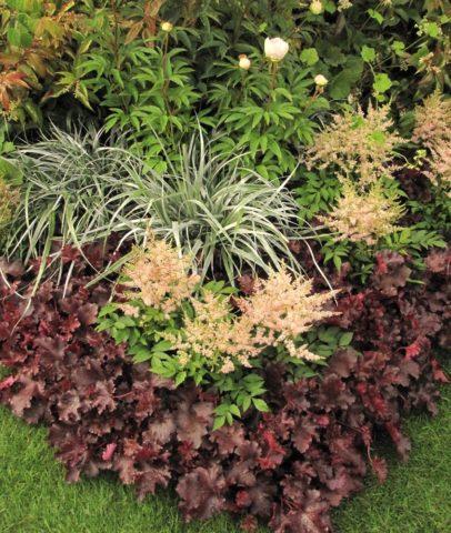 С какими цветами сочетается астильба и с чем сажать рядом