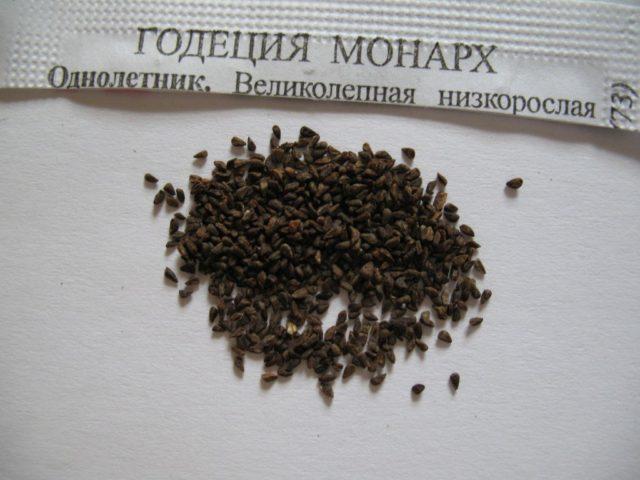 Годеция: выращивание из семян в домашних условиях, фото