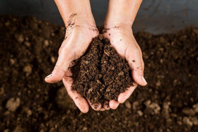Чем и как закислить почву для гортензии