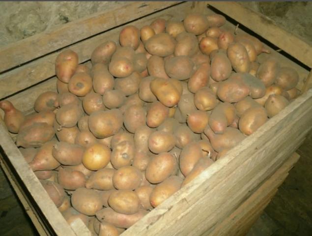 Как правильно хранить картошку зимой: в погребе, подполе, гараже